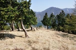 大室山の植林帯より望む丹沢主稜の写真素材 [FYI04113928]