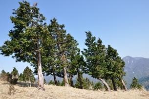 大室山の植林帯より望む丹沢主稜の写真素材 [FYI04113930]