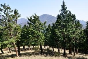 大室山の植林帯より望む丹沢主稜の写真素材 [FYI04113931]