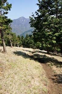 大室山の植林帯より望む丹沢主稜の写真素材 [FYI04113932]