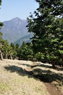 大室山の植林帯より望む丹沢主稜の写真素材 [FYI04113933]