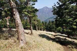 大室山の植林帯より望む丹沢主稜の写真素材 [FYI04113934]