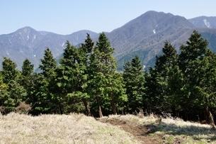 大室山の植林帯より望む丹沢主稜の写真素材 [FYI04113935]