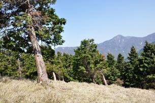 大室山の植林帯より望む丹沢主稜の写真素材 [FYI04113936]