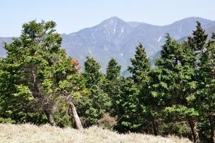 大室山の植林帯より望む丹沢主稜の写真素材 [FYI04113937]