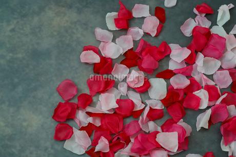 作り物の薔薇の花びらの写真素材 [FYI04114333]