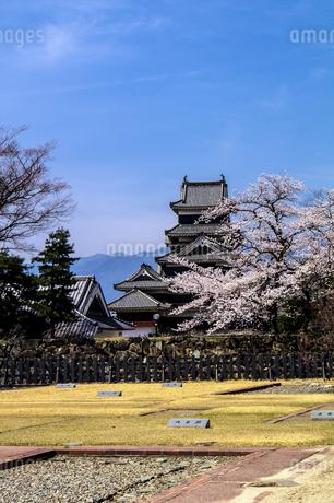 信州 長野県松本市 国宝松本城大天守と桜の写真素材 [FYI04114459]