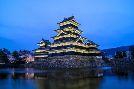 信州 長野県松本市 桜咲く国宝松本城のライトアップの写真素材 [FYI04114478]