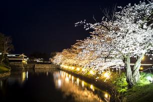 信州 長野県松本市春 松本城のお堀の桜のライトアップの写真素材 [FYI04114482]