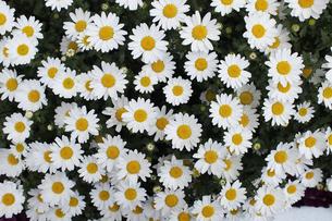 花の写真素材 [FYI04114571]