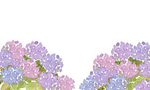 アジサイ水彩画のイラスト素材 [FYI04114686]