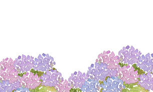 アジサイ水彩画のイラスト素材 [FYI04114687]