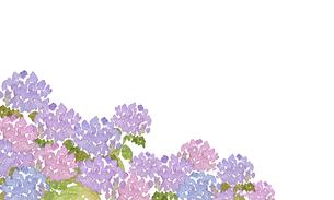 アジサイ水彩画のイラスト素材 [FYI04114688]