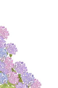 アジサイ水彩画のイラスト素材 [FYI04114689]