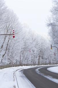 冬の朝  霧氷で真っ白になった森を抜ける道の写真素材 [FYI04114757]
