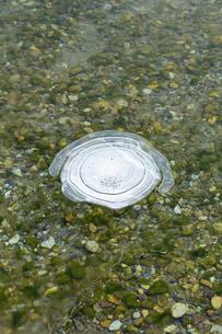 氷結し始めた湖面にできたアイスバブルの写真素材 [FYI04114779]