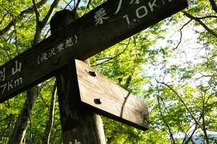 新緑の山道に標の写真素材 [FYI04115124]