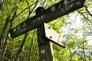 新緑の山道に標の写真素材 [FYI04115125]