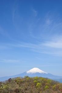 春の富士山眺望と青空の写真素材 [FYI04115197]