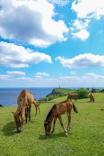 与那国馬の写真素材 [FYI04115281]