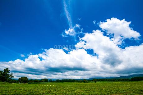 八ヶ岳農場牧草地と夏空の写真素材 [FYI04115403]