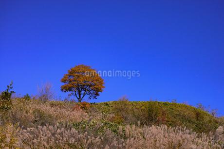 愛知県茶臼山高原、紅葉、その8の写真素材 [FYI04115406]