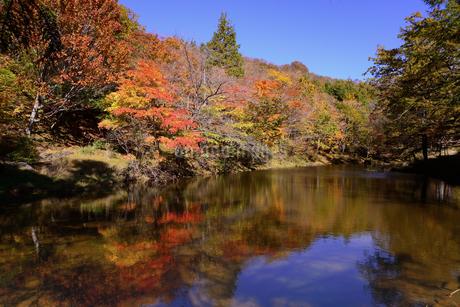 愛知県茶臼山高原、紅葉、その7の写真素材 [FYI04115408]