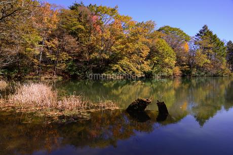 愛知県茶臼山高原、紅葉、その6の写真素材 [FYI04115409]