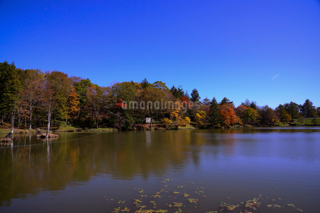 愛知県茶臼山高原、紅葉、その5の写真素材 [FYI04115410]