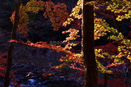 香嵐渓、紅葉、2019、その11の写真素材 [FYI04115438]