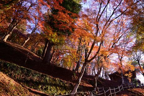 香嵐渓、紅葉、2019、その2の写真素材 [FYI04115447]