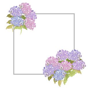 紫陽花フレームのイラスト素材 [FYI04115451]