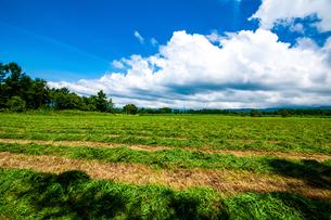 八ヶ岳農場牧草地と夏空の写真素材 [FYI04115456]