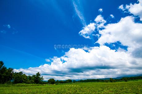 八ヶ岳農場牧草地と夏空の写真素材 [FYI04115457]