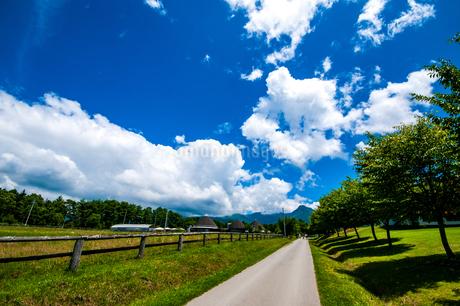 八ヶ岳農場牧草地と夏空の写真素材 [FYI04115473]