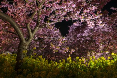松田山ライトアップ ①の写真素材 [FYI04115581]