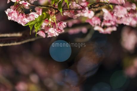 松田山ライトアップ ②の写真素材 [FYI04115582]
