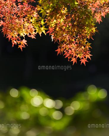 小石川後楽園の紅葉と玉ボケの写真素材 [FYI04115584]