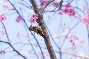 昭和記念公園の小鳥の写真素材 [FYI04115703]