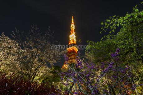 東京タワーの写真素材 [FYI04115717]