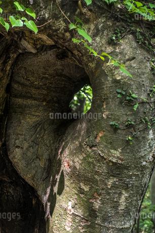 けやきの森の写真素材 [FYI04115741]