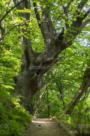 けやきの森の写真素材 [FYI04115743]