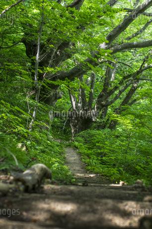 けやきの森の写真素材 [FYI04115744]