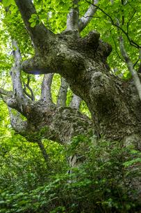 けやきの森の写真素材 [FYI04115746]
