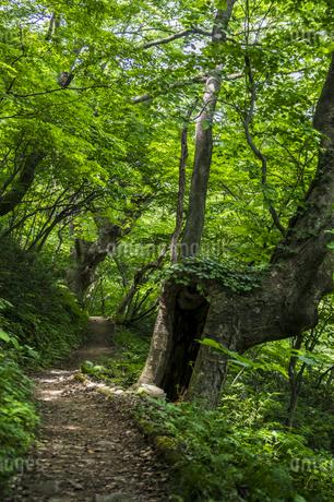 けやきの森の写真素材 [FYI04115747]