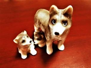 犬の親子の写真素材 [FYI04115779]