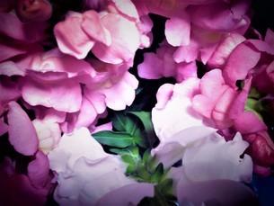 冬の花達の写真素材 [FYI04115793]