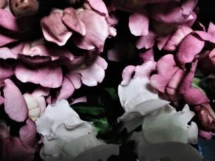 冬の花達の写真素材 [FYI04115794]