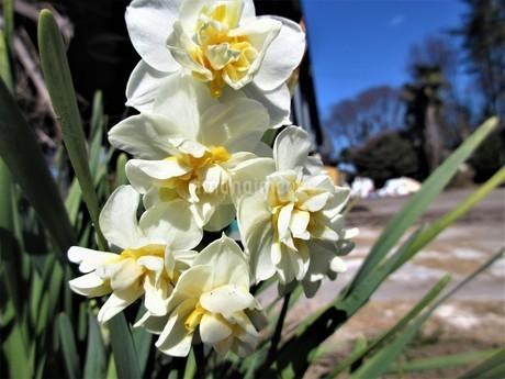 冬の花達の写真素材 [FYI04115796]