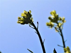 冬の花達の写真素材 [FYI04115800]